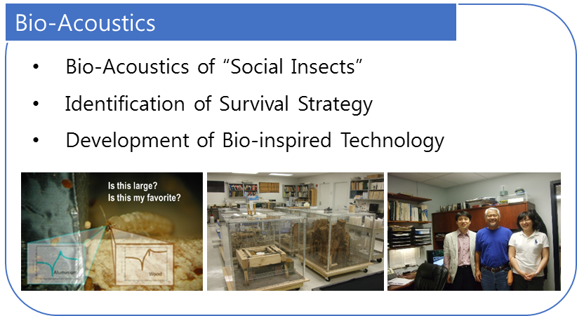 Bio-acoustics of Social Insects